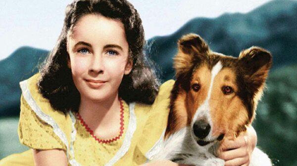 Lassie perro famoso