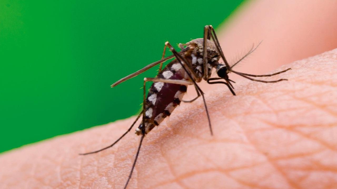 invasión de mosquitos en la Ciudad de Buenos Aires