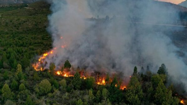 Los incendios forestales destruyeron una superficie tres veces mayor a capital federal