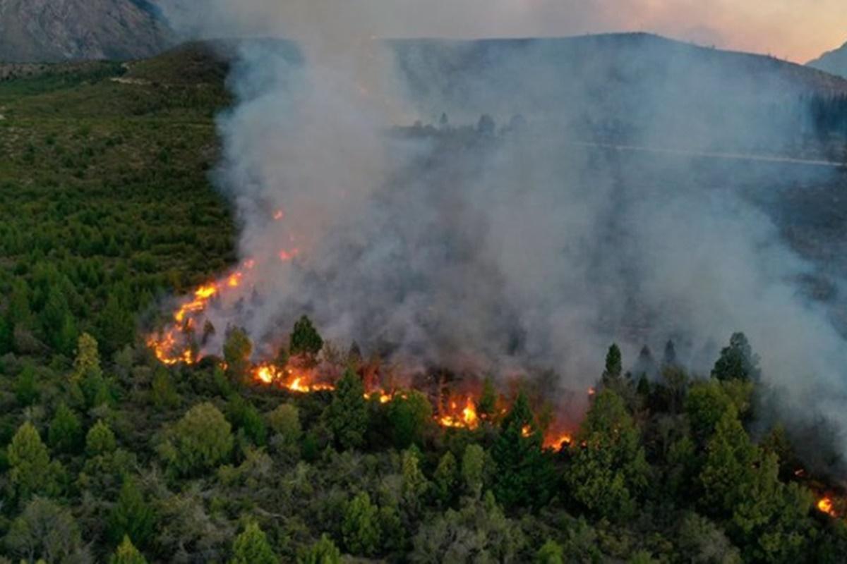 Los incendios forestales destruyeron una superficie tres veces mayor a capital federal