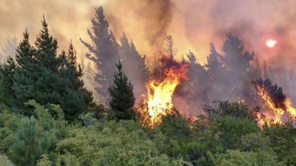 Los terrenos afectados podrían ser declarados zona de desastre y de emergencia