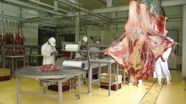 Exportación carne